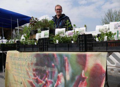 Direktvermarkter mit Jungpflanzen