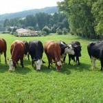 Kleine Herde bei Thürmsdorf